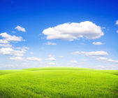 Beatiful morning green field with blue heaven — Stock Photo