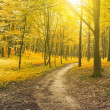 Beautiful morning in the misty autumn forest with sun rays — Stock Photo