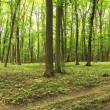 Panorama of a green summer forest  — Stock Photo