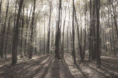 Old autumn forest in the morning pore of day — Stock Photo