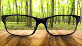 Clear forest in glasses on the background of blurred forest — Stok fotoğraf