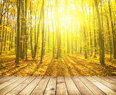 Beautiful sunlight in the autumn forest — Stock Photo
