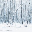 Panorama of winter forest with trees covered snow — Foto Stock