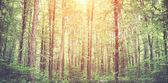 Misty spring forest — Stock Photo