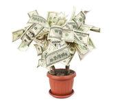 Money tree made of dollar bills — Stock Photo