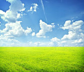 Green field with blue heaven — Stock Photo