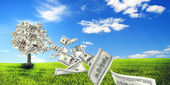 Money tree in meadow — Stock Photo