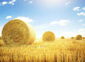 Hay rolls on meadow — Stock Photo