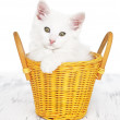 White kitten — Stock Photo
