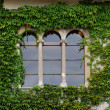 Castle window with ivy in Slovenia — Stock Photo
