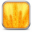 Square icon with ear wheat — Stock Vector