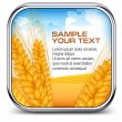 Square icon with ear wheat, & text  — Stock Vector