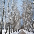Winter path in winter forest — Stock Photo #27093497