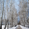 Winter path in winter forest — Stock Photo