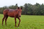 Häst linkade — Stockfoto