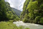 The mountain river in reserve — Stock Photo