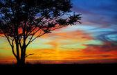 Pôr do sol em um campo — Fotografia Stock