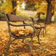 Autumnal park with bench — Stock Photo #35307555
