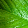 Stock Photo: Green leaf texture with water drops