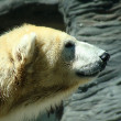 Polar bear — Stockfoto #16053429