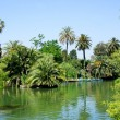 Tropical garden, lake and palms - Stock Photo