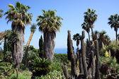 Floresta tropical — Fotografia Stock