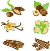 Collection of dessert ingredients. Hazelnuts, Cocoa beans, Vanil — Stock Vector