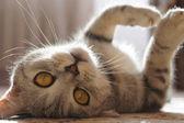 Amusing lovely kitten — Stock Photo