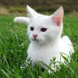 Adorable white kitten in the grass — Stockfoto