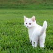Adorable white kitten in the grass — Stock Photo