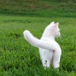 Adorable white kitten in the grass — Foto Stock