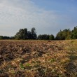 Plowed field in spring time with blue sky. — Stock Photo #30242063