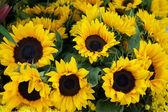 Sunflowers background — Stock Photo