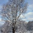 Beautiful winter landscape with snow covered trees — Stock Photo #37970657