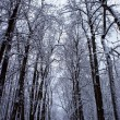 Beautiful winter landscape with snow covered trees — Stock Photo #37970687