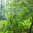 Stock Photo: Heavy rain against the trees