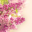 Pretty spring background. lilac flowers and empty space for your text — Stock Photo