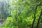 Heavy rain against the trees — Stockfoto