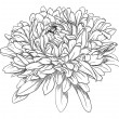 Flower hand drawn aster — Stock Vector #39643123