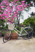 Old bicycle near blossoming tree cherry in springtime — Stockfoto
