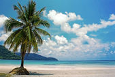 Tropical resort with a green lagoon and palm tree. Untouched tropical beach in Thailand — Stock Photo