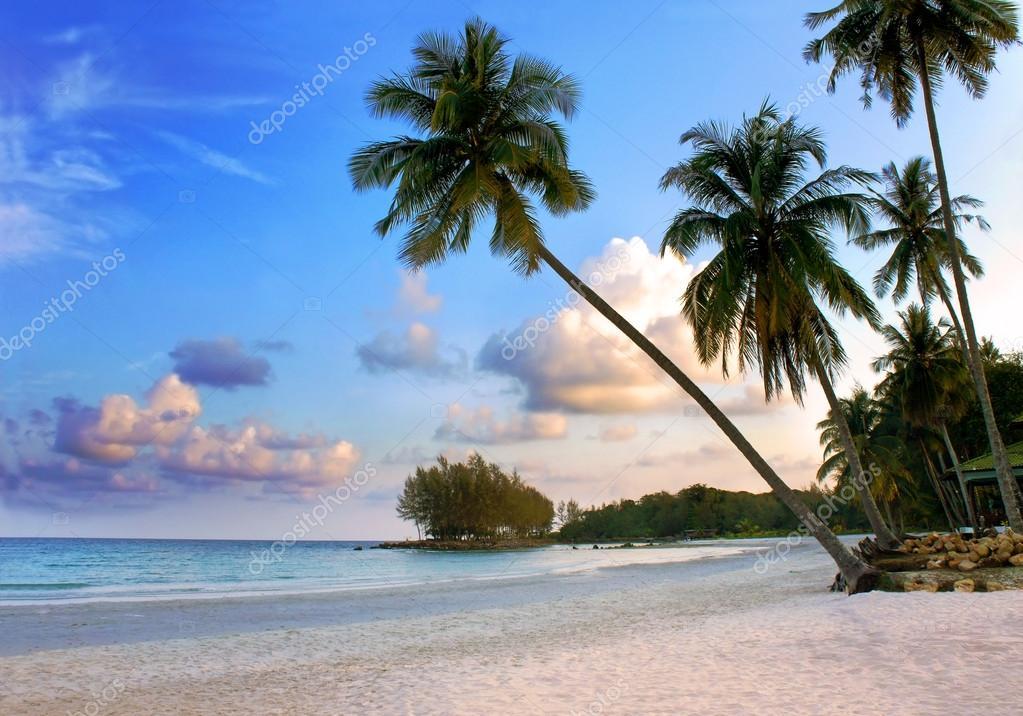 Bellissima spiaggia tropicale con sagome di palme al for Disegni di casa sulla spiaggia tropicale