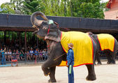 The world famous elephant show impressive in Nong Nooch tropical garden on April 23, 2014 in Pattaya, Thailand — Stok fotoğraf