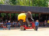 The world famous elephant show impressive in Nong Nooch tropical garden on April 23, 2014 in Pattaya, Thailand — Стоковое фото