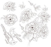 Flower set. Vintage collection of hand drawn roses and birds isolated on white background — Stock Vector