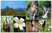 Malaysian Jungle — Stock fotografie