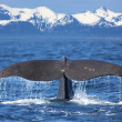 Whale tail — Stock Photo #25754551