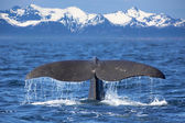 Whale tail — Stock fotografie
