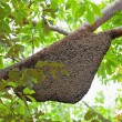 Natural Beehive — Stock Photo #34934731