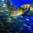 Green turtle — Stock Photo #35776463